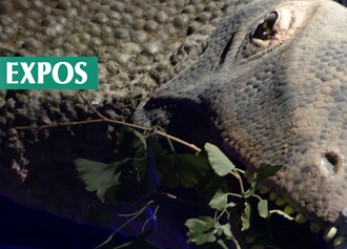 CRITIQUE// Dinosaure, la vie en grand au Muséum de Paris : la folie des grandeurs